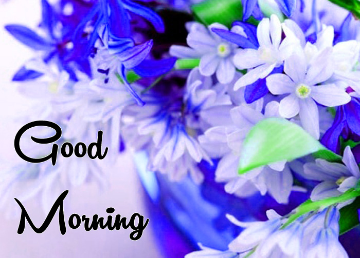 beautiful Good Morning flower images hd