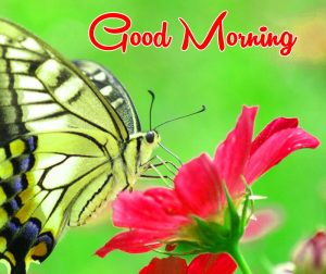 beautiful butterfly Good Morning images hd
