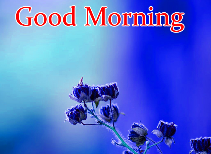 blue flower Good Morning images for whatsapp hd