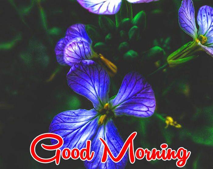 blue flower Good Morning wallpaper