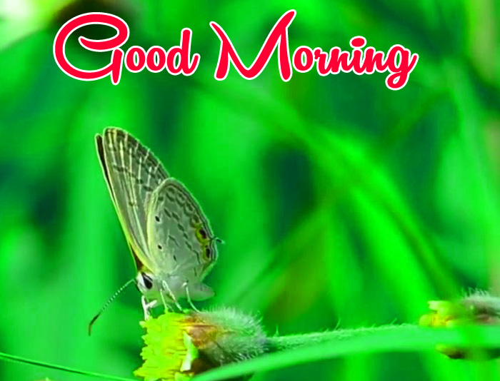 butterfly and nature Good Morning pics