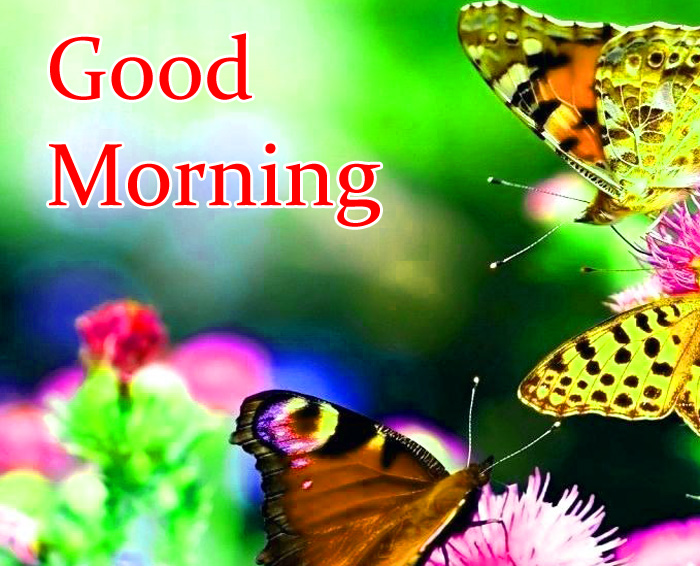 butterfly flower Good Morning photo