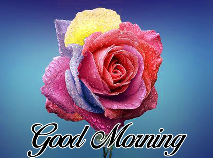 colorful flower Good Morning images for whatsapp