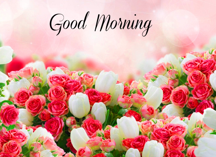 colorful flower Good Morning photo for whatsapp hd