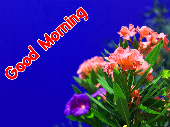 colorful flower Good Morning photo