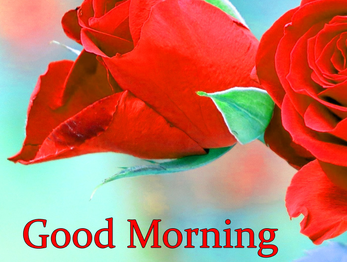cute Good Morning red flower images hd