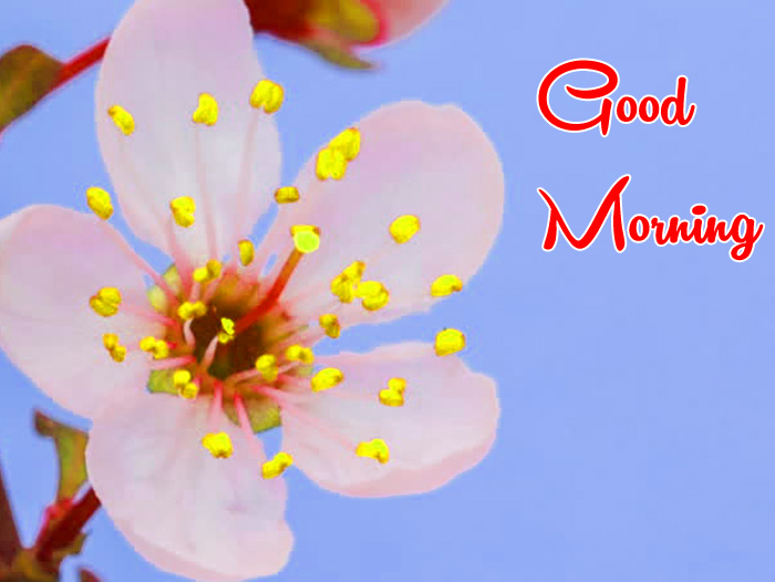 cute white Good Morning flower images hd