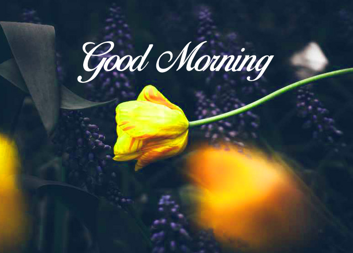 cute yellow Good Morning images for whatsapp