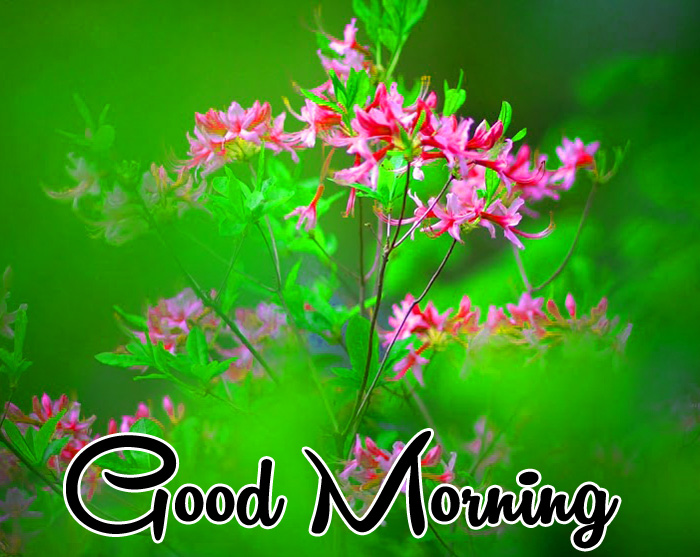 green nature flower Good Morning images for whatsapp