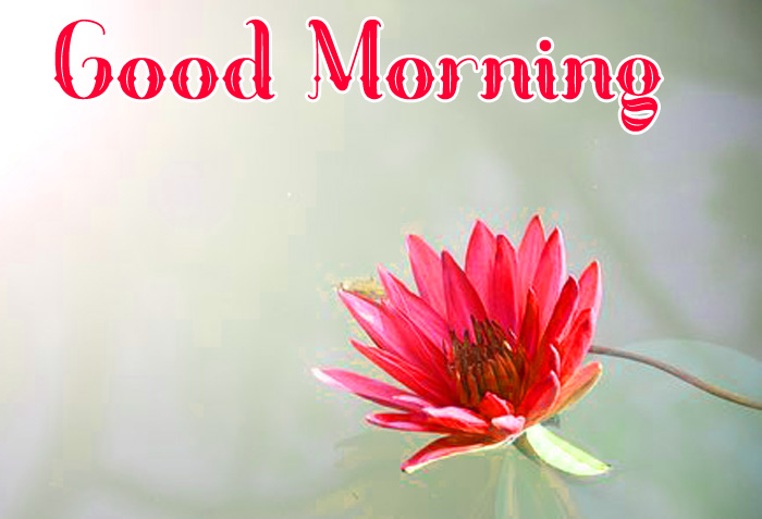 latest red flower Good Morning hd pics