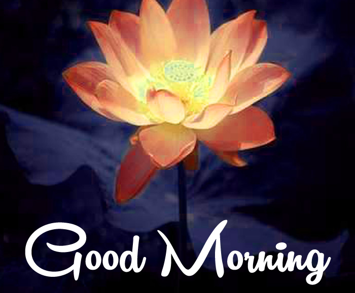 lotus flower Good Morning wallpaper