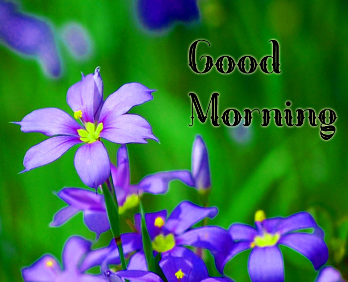 many flower Good Morning hd picture