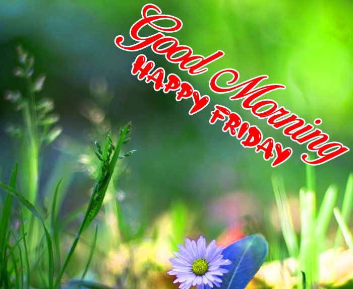 nature plant Good Morning Happy Friday images hd