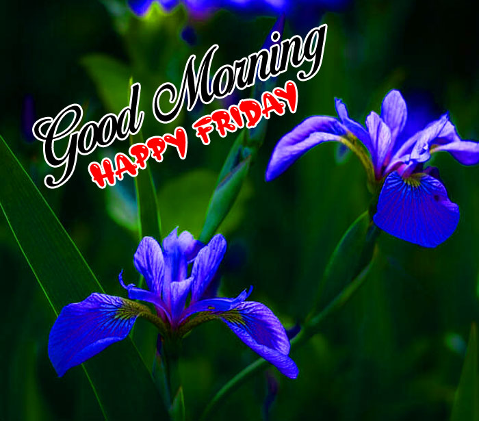 new blue flower Good Morning Happy Friday images hd