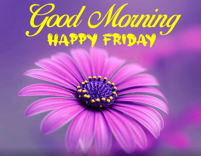 new flower Good Morning Happy Friday images hd