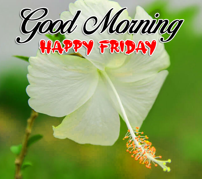 new white flower Good Morning Happy Friday images hd
