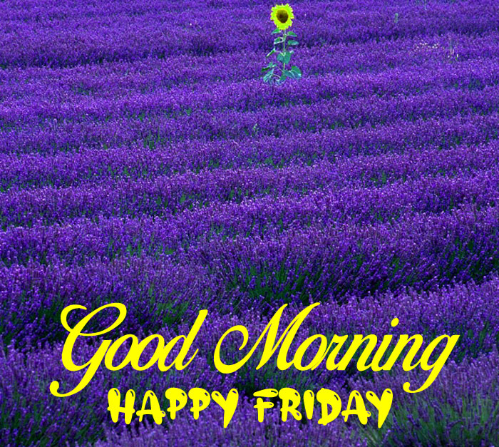 nice Good Morning Happy Friday images hd