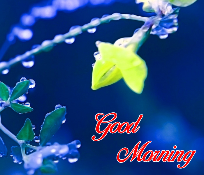 nice Good Morning yellow flower images