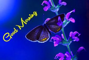 nice blue butterfly Good Morning photo