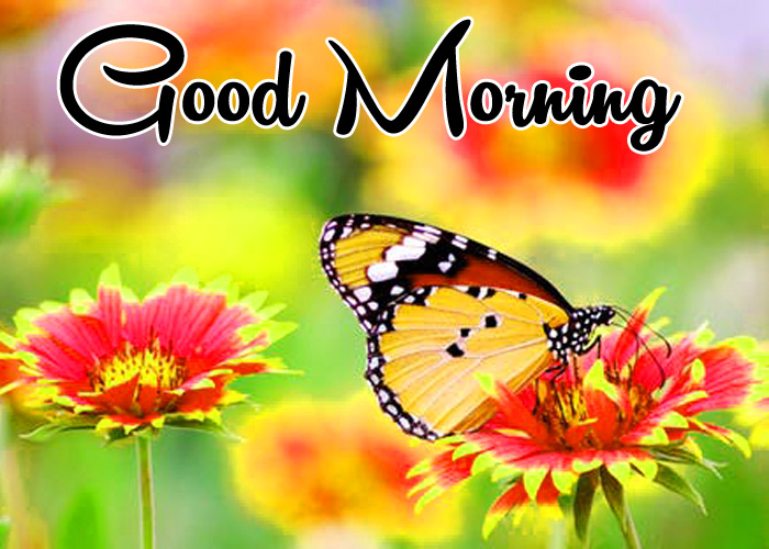 nice butterfly Good Morning pics hd