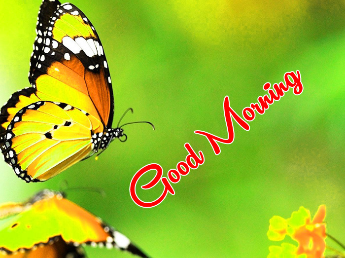 nice colofull butterfly Good Morning photo