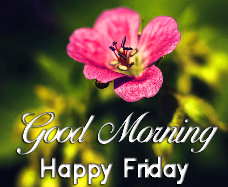 nice pink Good Mornin Happy Friday flower images