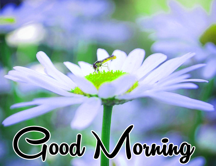 nice white flower Good Morning wallpaper