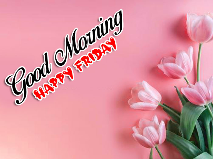 pink tulips flower Good Morning Happy Friday images hd