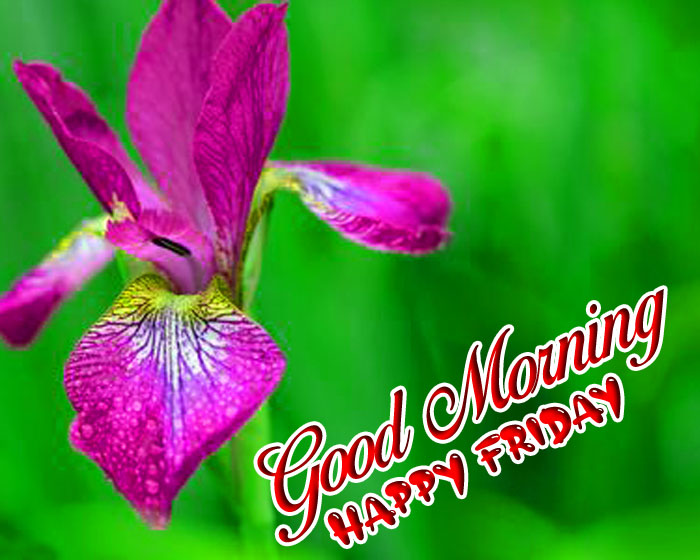 purple Good Morning Happy Friday images hd