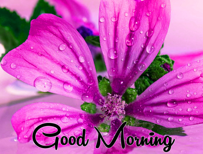 purple flower Good Morning pics hd