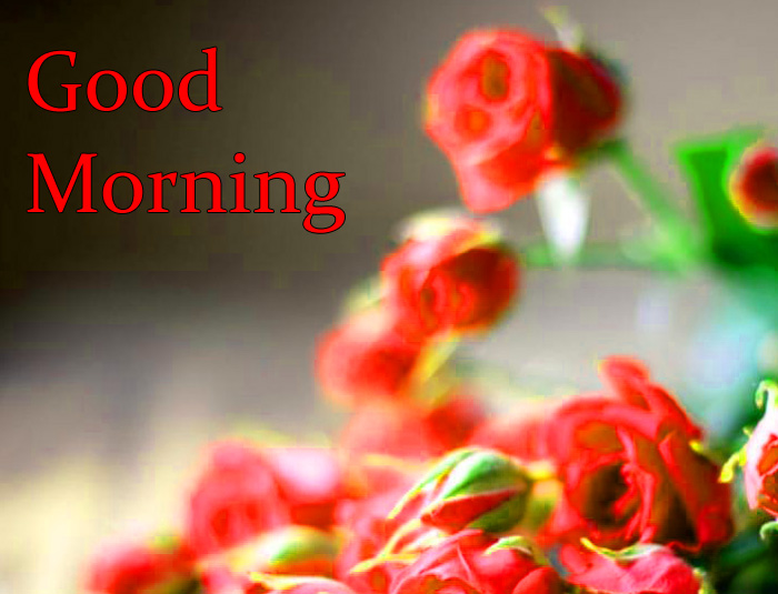 red Good Morning flower pics hd