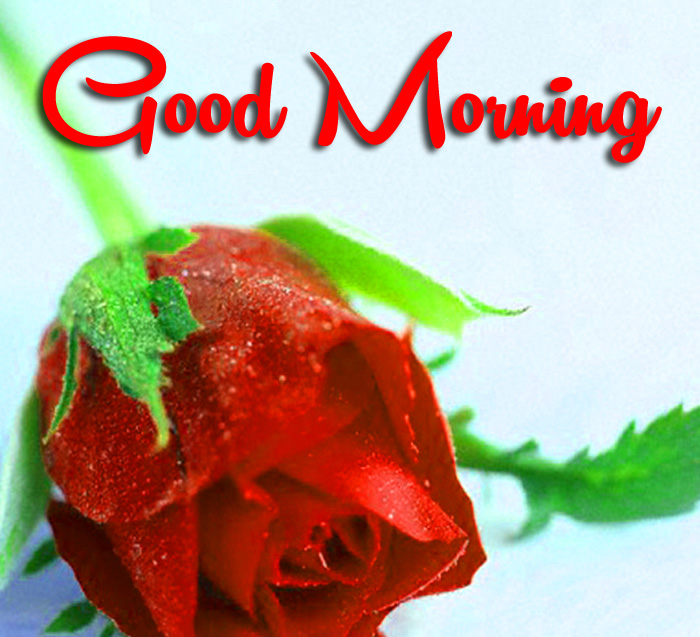 red flower Good Morning hd photo
