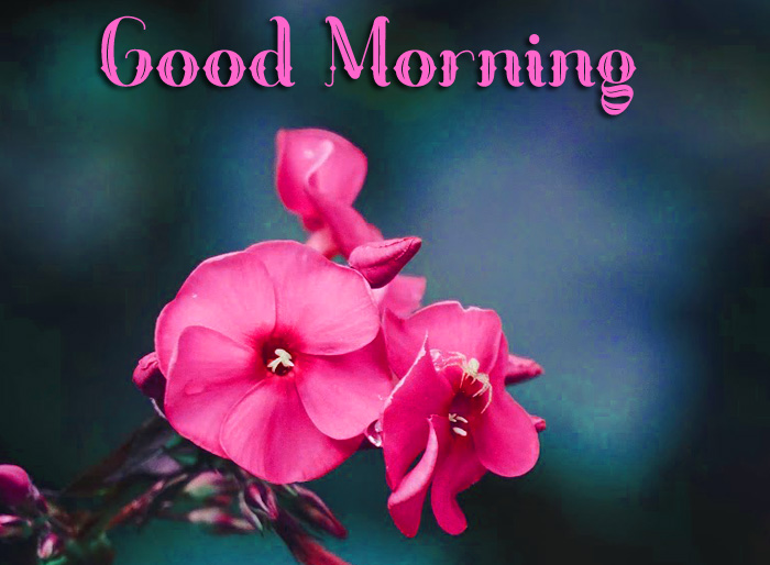 red flower Good Morning photo for whatsapp hd