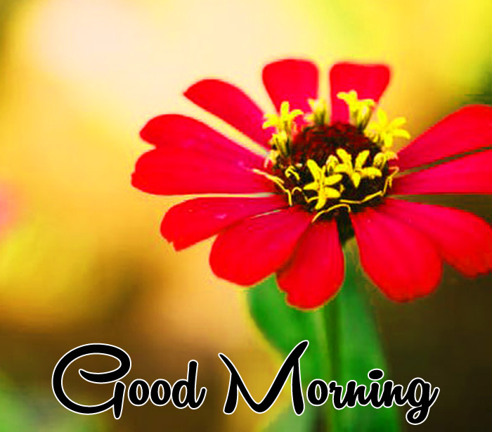 red flower Good Morning pics for whatsapp hd