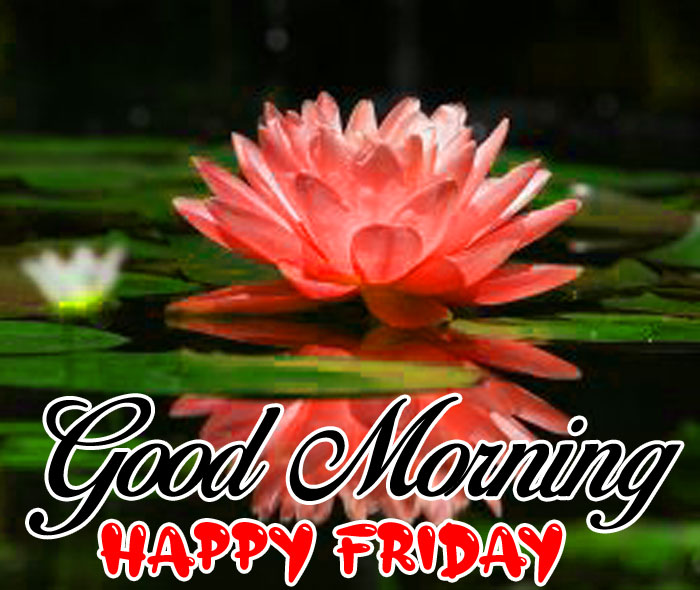 red lotus flower Good Morning Happy Friday images hd