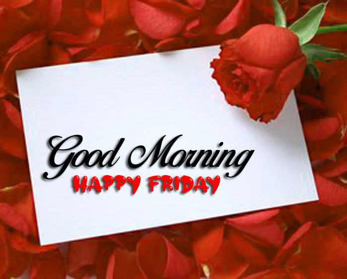 red roae Good Morning Happy Friday love images hd
