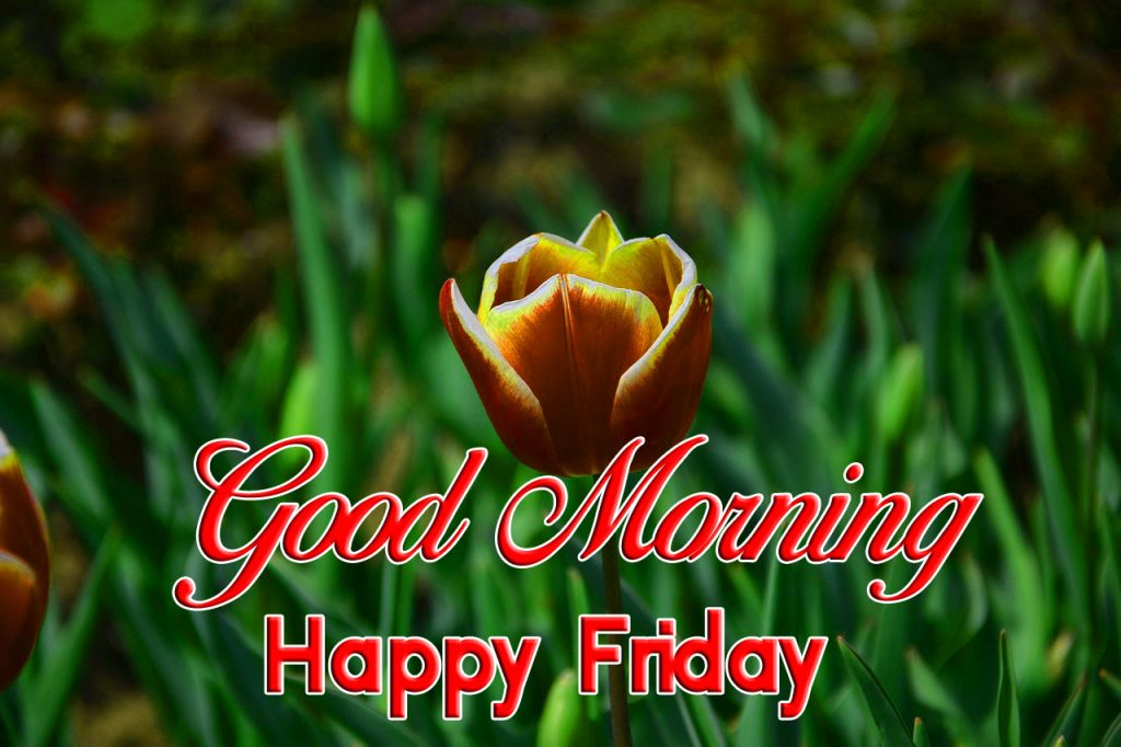 116+ Good Morning happy Friday for Whatsapp and Instagram