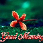 60 +sunrise good morning flower images hd