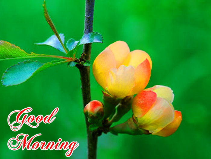 small flower Good Morning photo for whatsapp hd