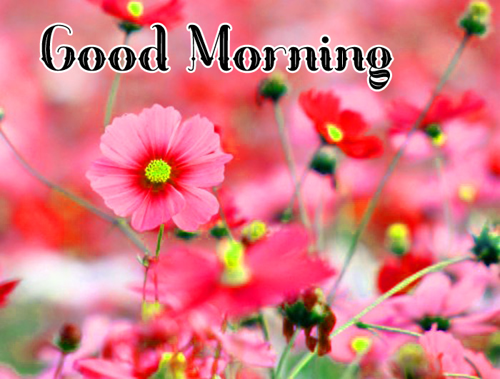 small red flower Good Morning hd