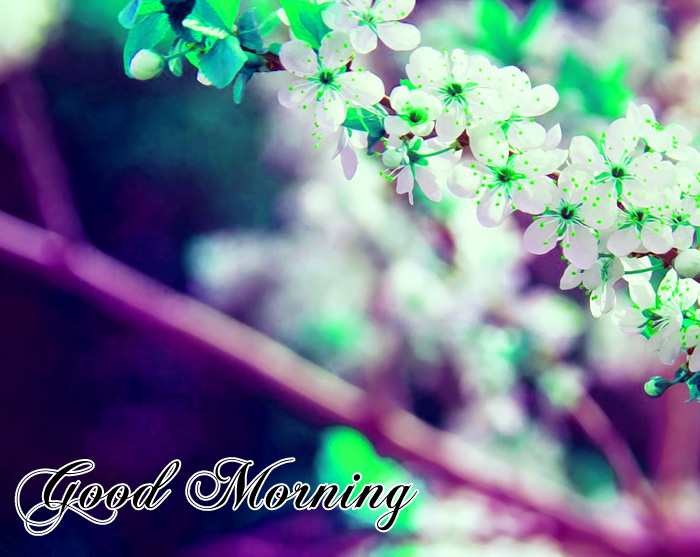small white flower Good Morning photo for whatsapp hd