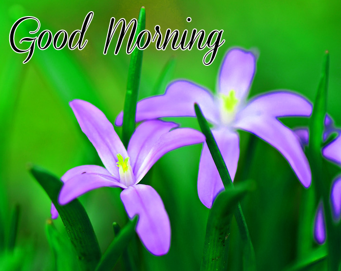 two flower Good Morning photo for whatsapp hd