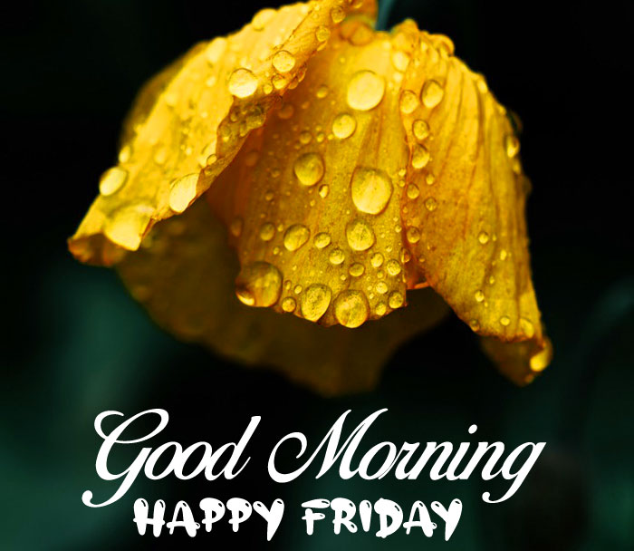 ultra Good Morning Happy Friday images hd