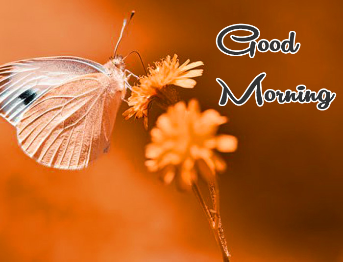 white butterfly Good Morning photo