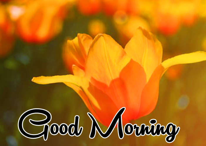 yellow flower Good Morning pics hd