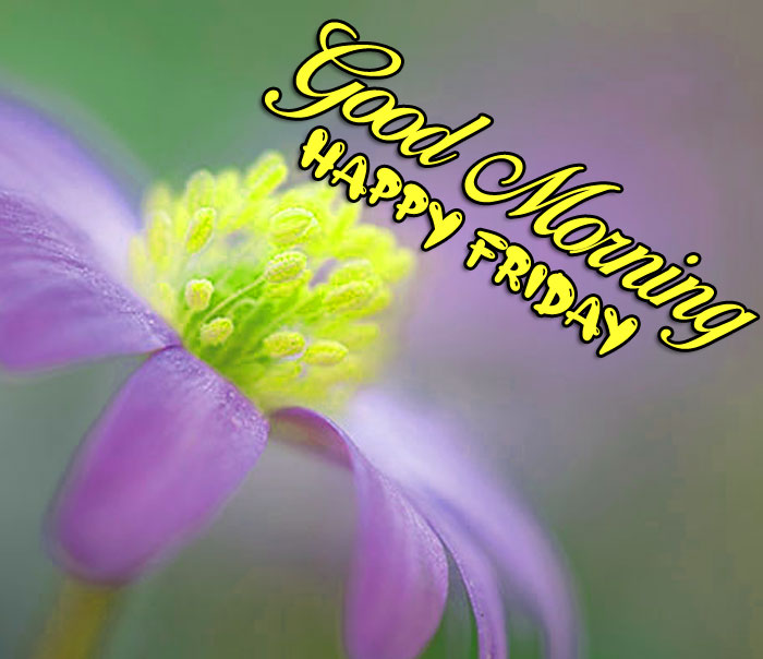 yellow macro flower Good Morning Happy Friday images hd