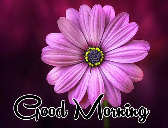 Good Morning images for whatsapp hd