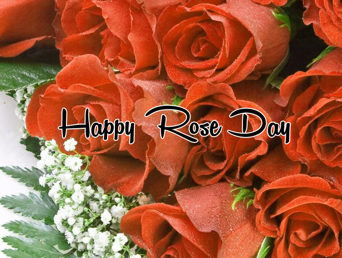 Happy Rose Day flower wallpaper