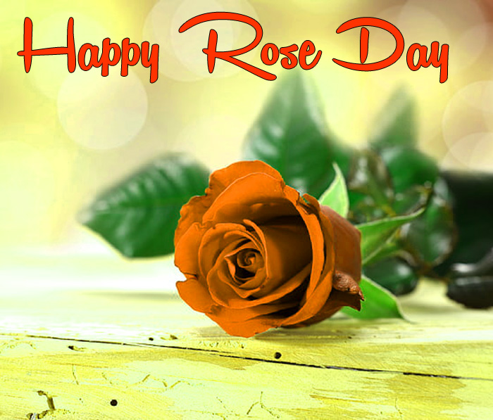 Happy Rose Day images for whatsapp hd