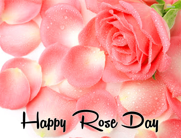 Happy Rose Day images hd
